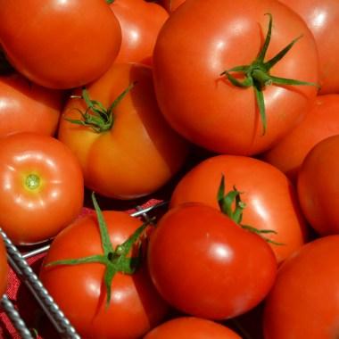 Troy Farmer's Market Tomatoes Raya Ioffe