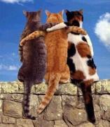 CatFriendship (1)
