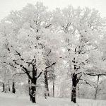 snow1555487_1453401984879684_81533567_n
