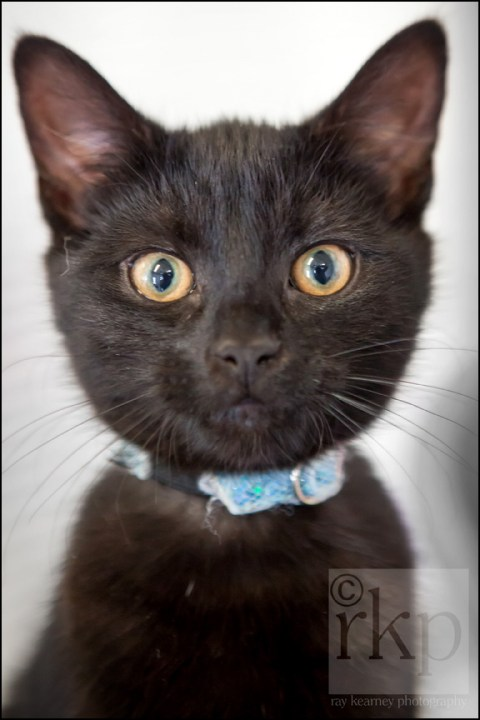 Black kitten staring at camera