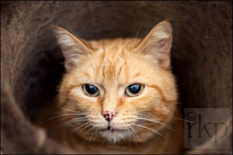 Ginger cat in tube