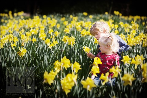 Young brother and sister amongst daffodils in Walkden Gardens, Sale