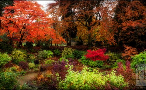 Autumn leaves in sunken garden, Denzell Gardens, Altrincham by Ray Kearney Photography