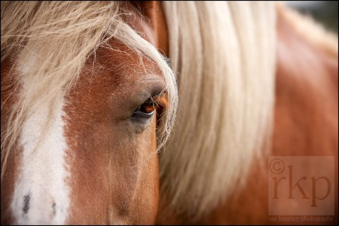 Close up of horse's eye