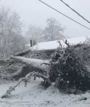 A tree narrowly missed striking a house on Franklin Street in Whitman on Tuesday, March 13. (Photo courtesy Whitman Fire Department)