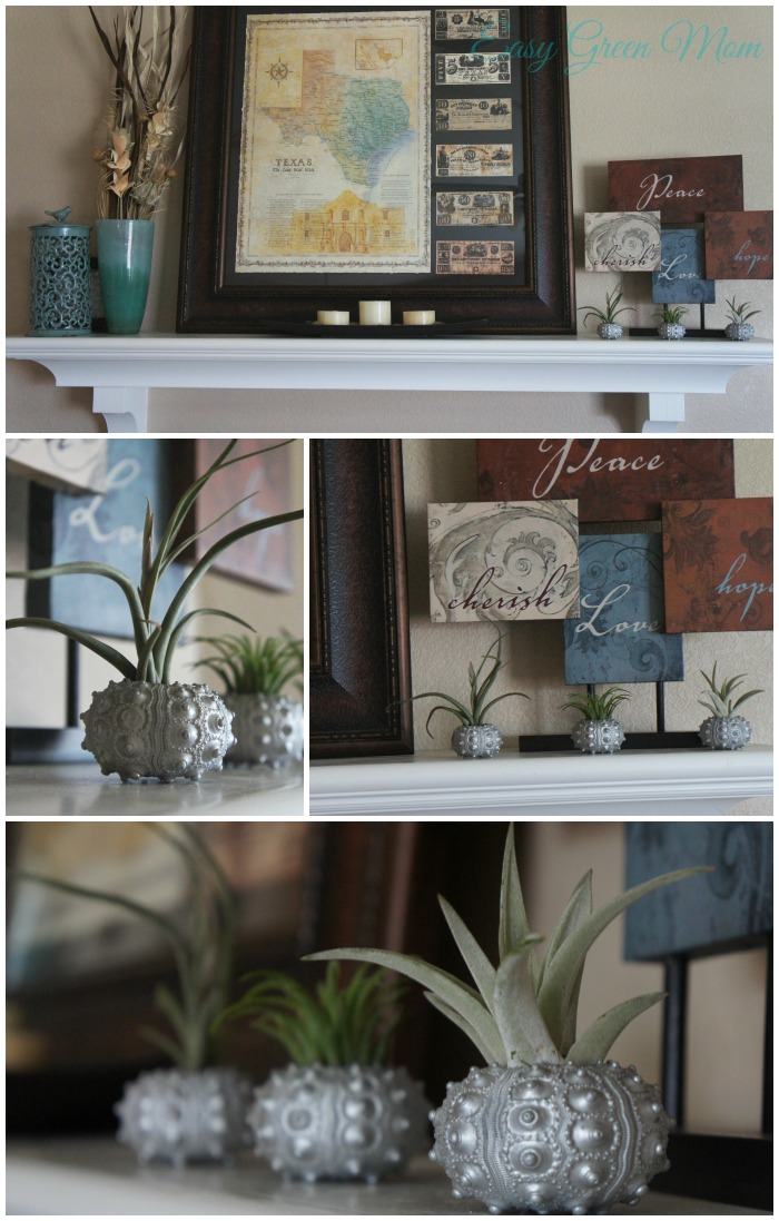 Air Plants to decorate