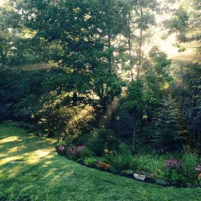 A backyard in Connecticut in the middle of summer with the sun shining through trees.
