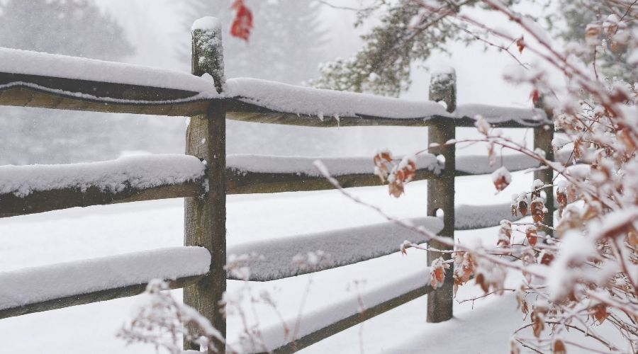 A fence, shrubs, and trees covered in snow during a Connecticut winter
