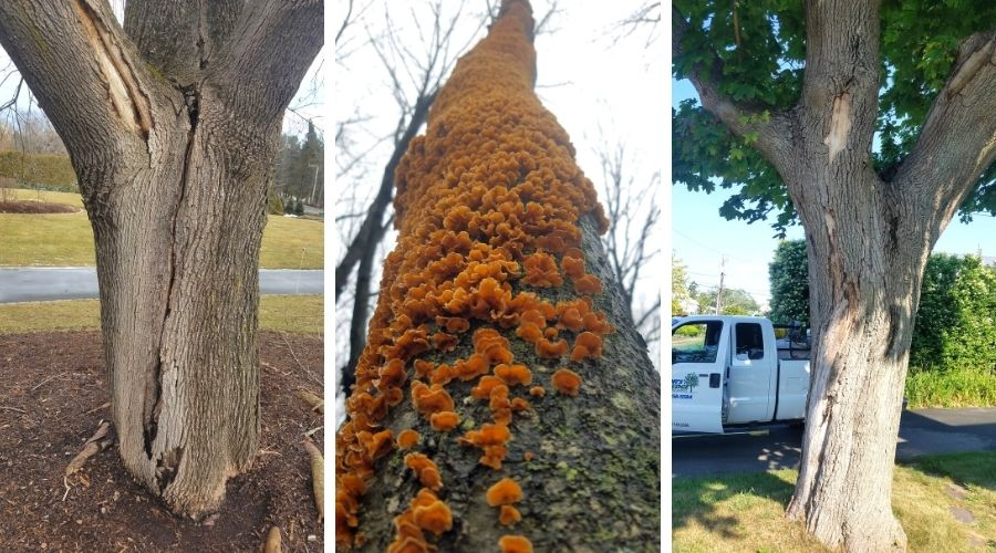 Some decay in trees is noticeable, such as cracks in the tree's trunk, fruiting fungal bodies, or areas of loose or missing bark.