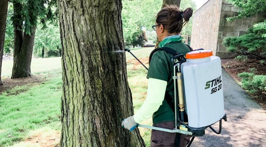A Rayzor's Edge arborist applies a treatment to a tree in Connecticut as part of a summer tree care program.