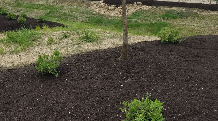 Soil around new plants in Connecticut planted by Rayzor's Edge Tree Service