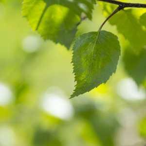green leaf against green background