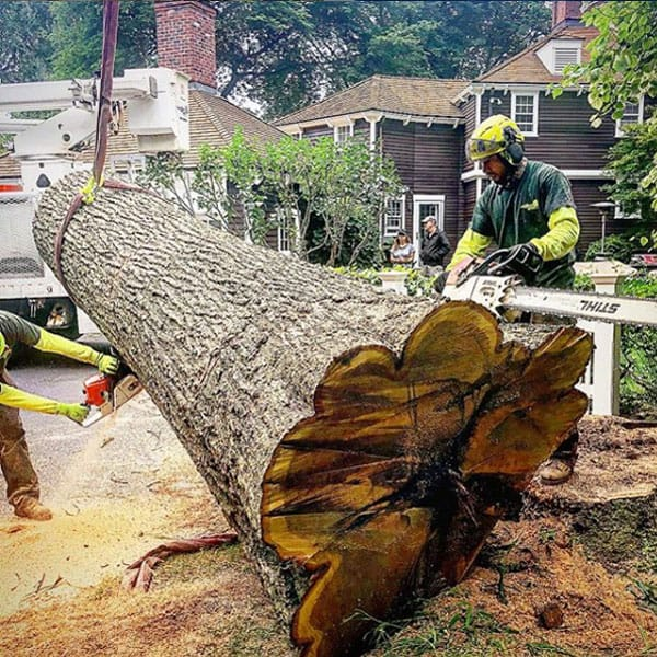Rayzor's Edge crew cutting apart a large tree