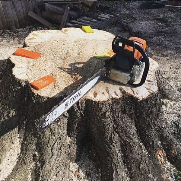 chainsaw and wedges on a large tree stump