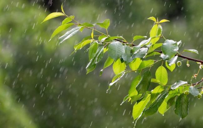 """Результат пошуку зображень за запитом """"Дожди, грозы и жара: синоптики уточнили прогноз"""""""
