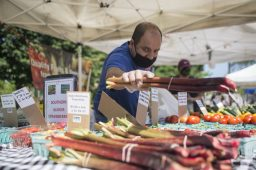 Sellers at the Jeffrey Farms booth pack up rhubarb on Saturday, June 6, 2020, during the opening weekend of the Brookfield Farmers Market outside of Village Hall in Brookfield. (Alex Rogals/Staff Photographer)