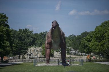 A child looks up at the largest dinosaur apart of the Dino's Everywhere exhibit on July 2, during a members only day at the Brookfield Zoo. (Alex Rogals/Staff Photographer)
