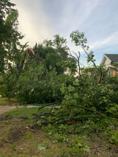 A large tree failed in the 2200 block of 10th Avenue in North Riverside, falling between two houses but apparently causing just minor damage. | Photo courtesy of Tim Kutt