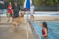 Owners play with their dogs in the pool on Sept. 7, during the Dog Days of Summer dog swim at the Riverside Swim Club. (ALEX ROGALS/Staff Photographer)