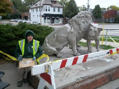 Restoraton: Brookfield Zoo's Sarah Feliciano patches up the lions at the Zoo Stop in Hollywood. The lions (there were three originally) were placed there in 1986. (Photo by Chris Stach)