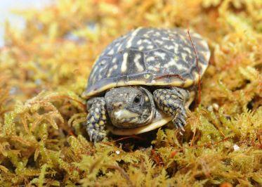 Photo courtesy of Chicago Zoological Society