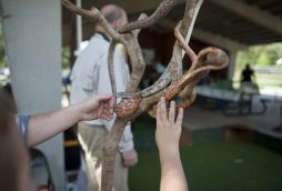Tristen Moy and Dillon Coen touch a corn snake. | William Camargo/Staff Photographer