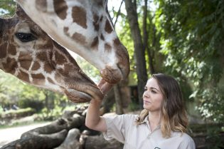 Zookeeper Raquel Ardisana gets up close and personal with giraffes at Brookfield Zoo in September. | William Camargo/Staff Photographer