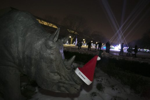 A statue of a Rhino at the Brookfield Zoo adorned with a Santa hat while a light show continues in the background as part of the New Years Celebration.   Rick Majewski/Contributor