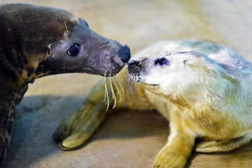 Photo by Jim Schulz/Chicago Zoological Society