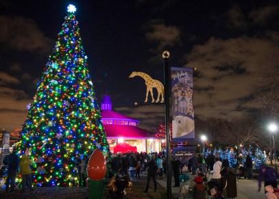 Brookfield Zoo's Holiday Magic