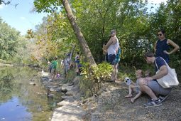 Participants wait along the creek on Sept. 23, during the Beautify Brookfield's duck races at the Fine Arts Fest at Kiwanis Park. | Alexa Rogals/Staff Photographer