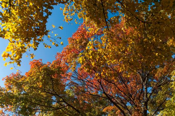 Celebrate the arrival of fall colors in Riverside's arboretum as the village Landscape Advisory Commission hosts its first arboretum tour in Guthrie Park on Oct. 7 from 10:30 to 11:30 a.m.
