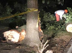 The impact of the crash sheared a mature tree (seen on the ground at left) in two. Six people were taken to local hospitals for treatment of lacerations, broken bones, concussions and internal bleeding. (Photo courtesy of the Riverside Police Department)