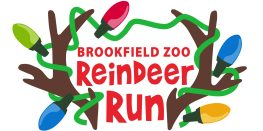 Runners are invited to grab their glow sticks and running shoes and head over to Brookfield Zoo for the first-ever Reindeer Run on the night of Saturday, Nov. 24.