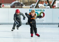 The skating rink has returned to Brookfield Zoo through the winter season. (Photo courtesy of the Chicago Zoological Society)