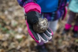 Sophie Lesniak, 5, holds out a tree seed before planting it on Saturday, Nov. 23, during the 13th Annual 1000 Tree Planting Project in Riverside, Ill. | ALEX ROGALS/Staff Photographer