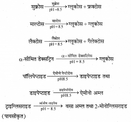 RBSE Solutions for Class 12 Biology Chapter 22 मानव का पाचन तंत्र 16