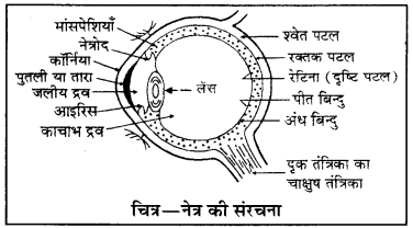 RBSE Class 10 Science Model Paper 1 image 22