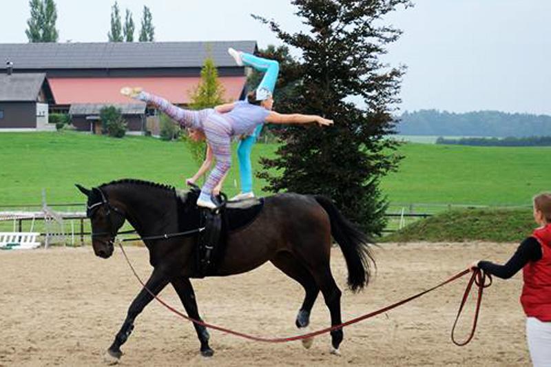 """Voltigierpferd Chapot """"Chapi"""""""
