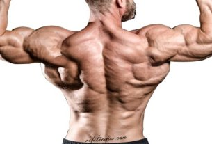 back anatomy