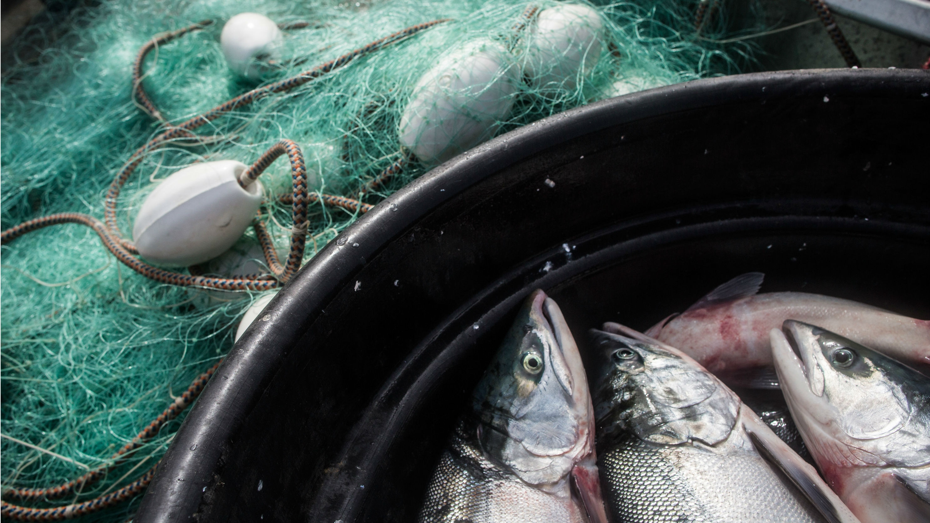 What Congress S Farm Bill Did For Fish Sticks In Alaska