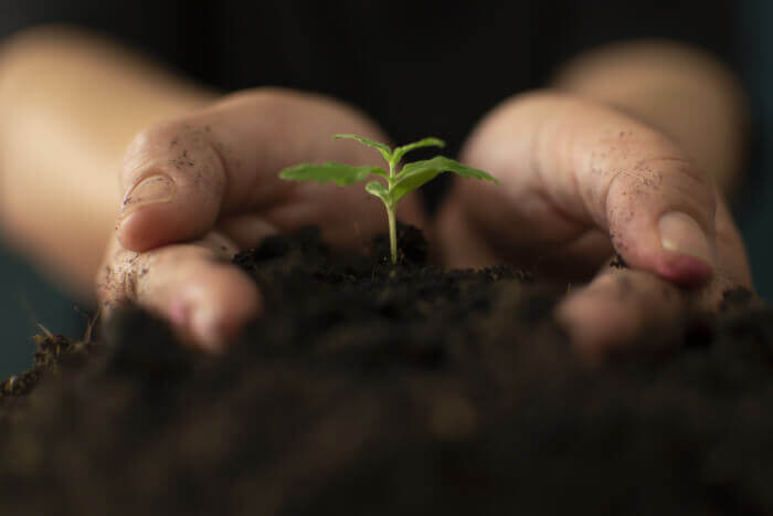 Hands holding seedling, supporting you with mindfulness coaching