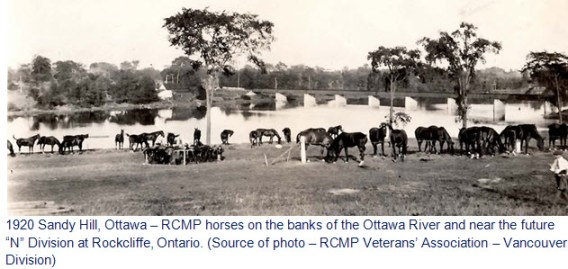 1920 Sandy Hill, Ottawa - RCMP Horse near the Ottawa River