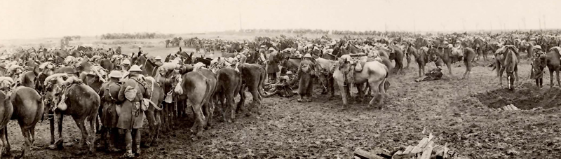 World War 1: Photograph of Canadian Cavalry waiting to go into action