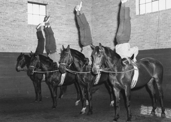 Photograph of RCMP recruits familiarizing themselves with the Force horses (Source of photo - Ric Hall's Photo Collection).
