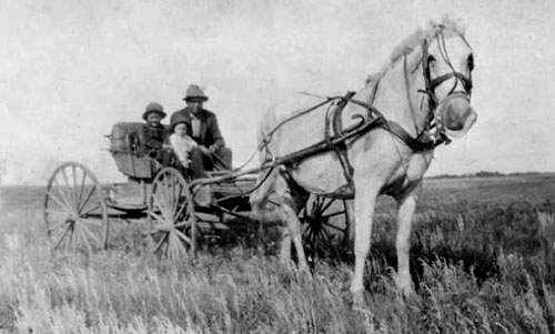 Photograph of the horse and wagon used regularly in the 1930s in and around Yorktown Saskatchewan.