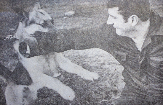 Photograph of RCMP Police Service Dog putting the bite on RCMP Constable Paul Higgins.