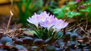 spring-wallpaper-widescreen