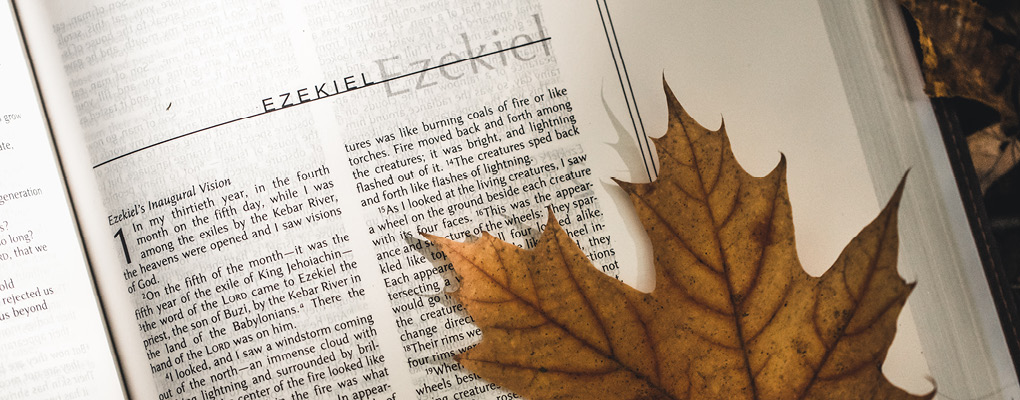 sermons page head image of a bible and a leaf