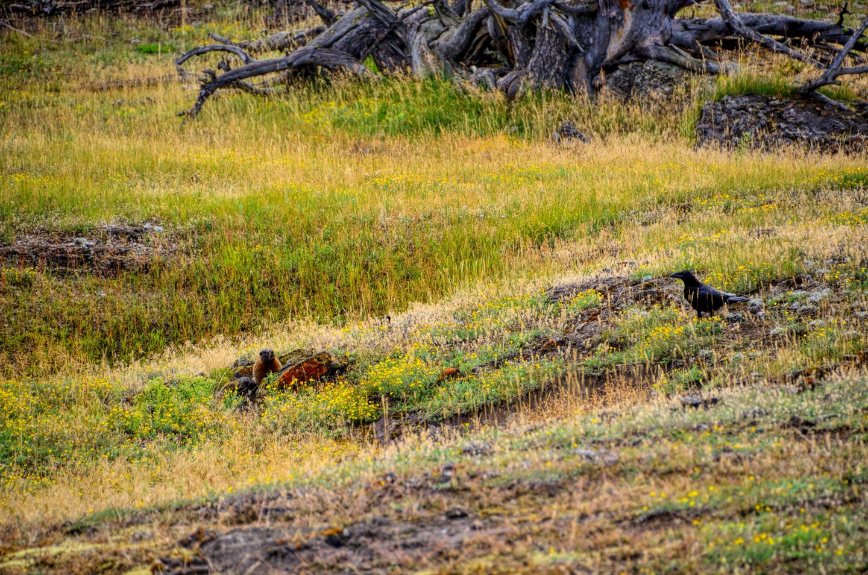 Yellowstone_790-DSC_1129_08-14-2015_093948